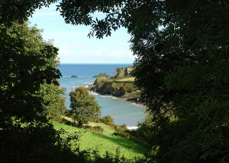 The cove from the coast path.